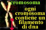 un cromosoma