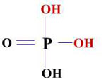 il gruppo fosfato