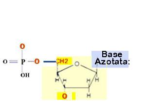 nucleotide generico
